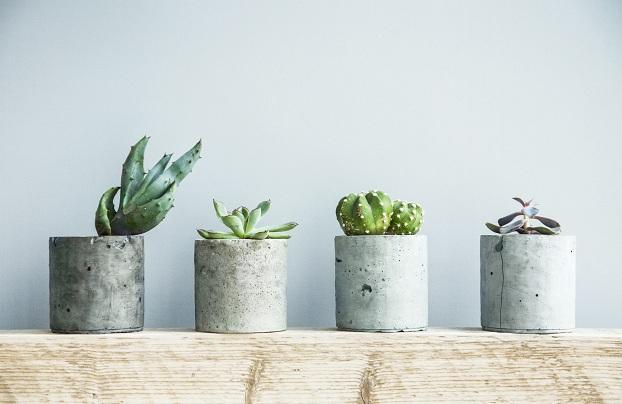 Scandinavian Plants