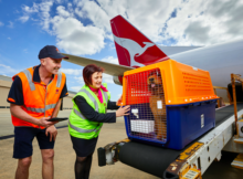 transporting dogs internationally