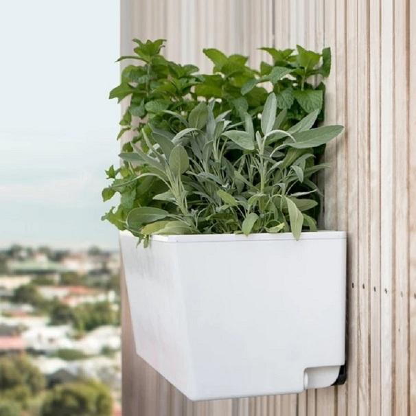 self watering wall