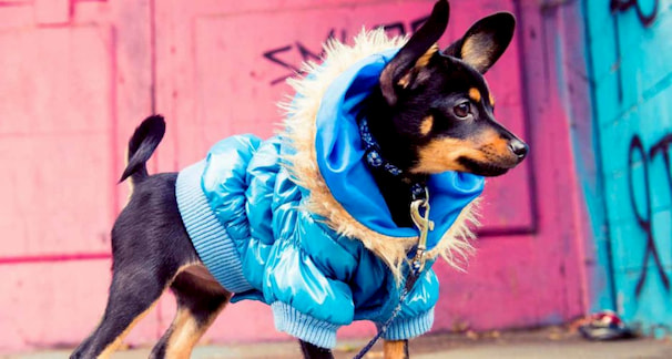 clothes-for-dog