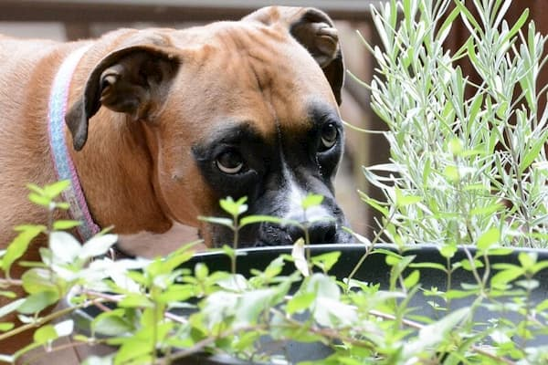 dog smelling the plants in the garden