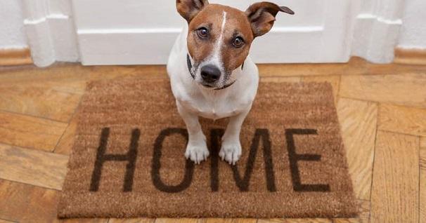 Benefits of Using Doormats