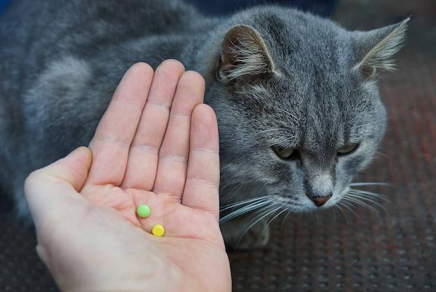cat flea tablets
