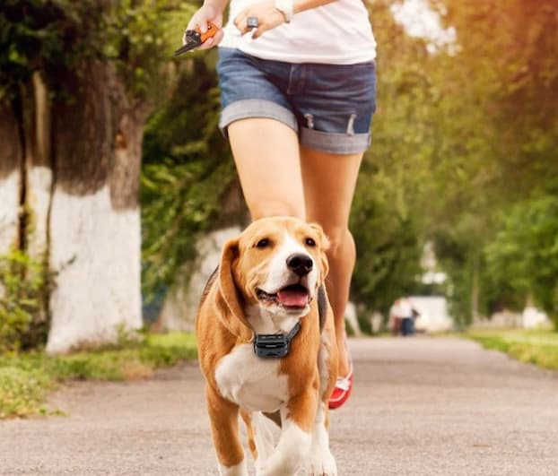 girl running with a dog wearing bark control device