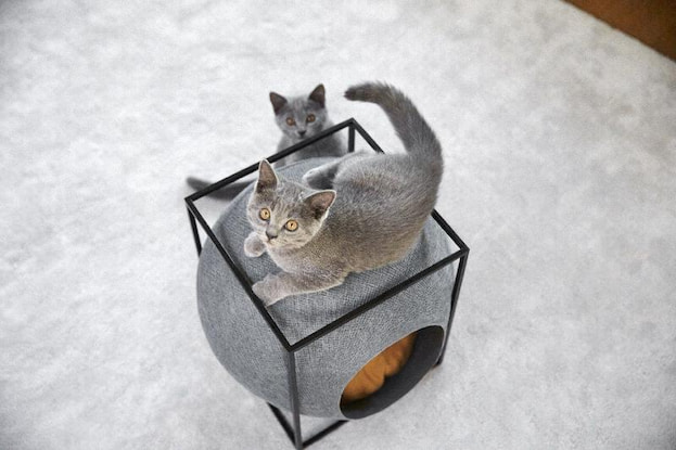 cats close to their cube beds
